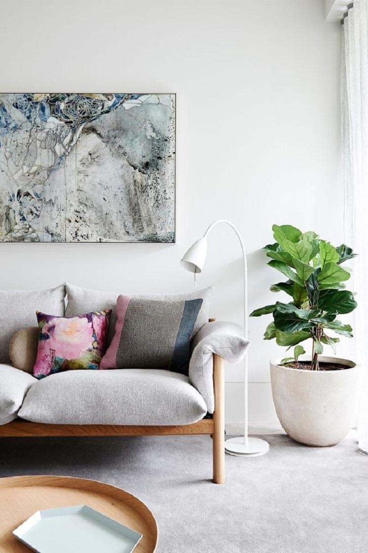 Adopt a Fig Leaf Tree