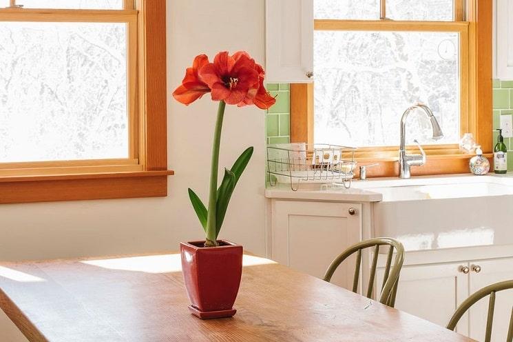 8 گیاه خانگی گل دار برای افزودن رنگ به خانه شما
