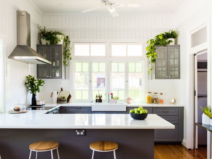5 گیاه خانگی که در آشپزخانه شما رونق می گیرند