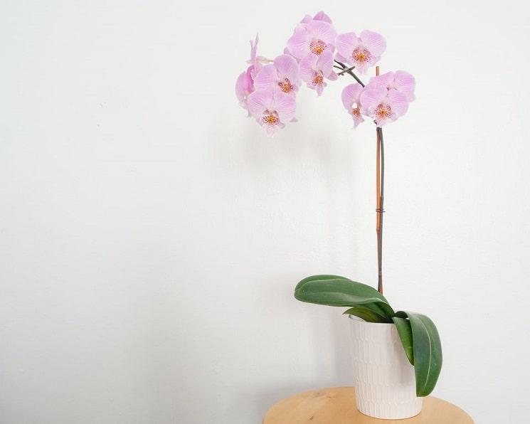 8 گیاه گرمسیری برای رشد در محیط داخلی