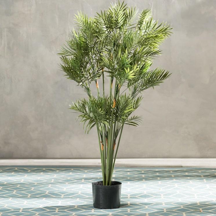 مشخصات گیاه نخل سالن